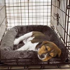 Puppy Housebreaking