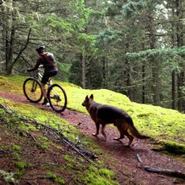 Dog Walking and Trail Manners