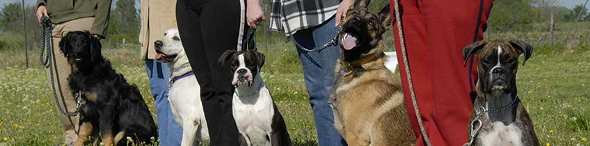 dog training program