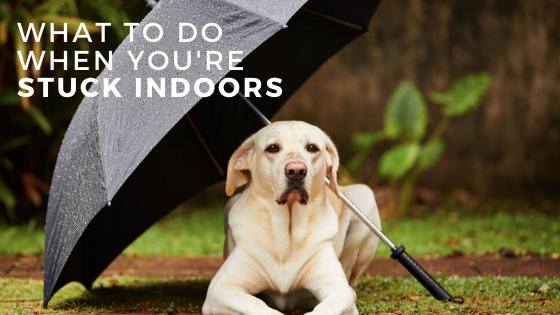 Rainy Day Dog Training Games